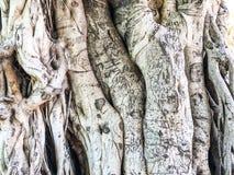 Trä naturtextur abstrakt bakgrundsgray Närbild Arkivbilder