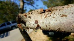 Trä och bevattnar Arkivfoto