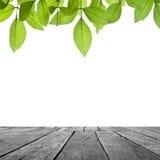 Trä och blad på vit Arkivbild