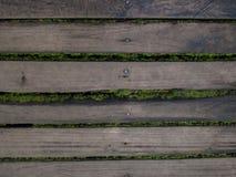 Trä och moss Arkivfoto