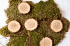 Trä och myskar Royaltyfri Foto