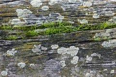 Trä- och myskbakgrund Royaltyfri Foto