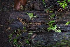 Trä och ormbunke Arkivbild