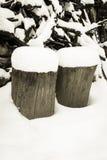 Trä och snow Royaltyfria Bilder