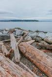 Trä och vaggar vid vatten med sikt av Elliot Bay i Myrtle Edwards Park nära centrum av Seattle, USA arkivbild