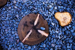Trä på havsstenen Royaltyfria Bilder