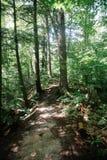 Trä på jordningen Arkivbilder