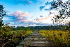 Trä på pir på träsk South Carolina för lågt land på soluppgång med molnig himmel Arkivfoto