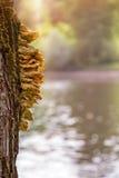 Trä plocka svamp på ett träd På rätten är det suddiga dammet arkivbild