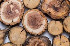 Trä såg det klippta trädet, med cirklar av liv royaltyfri foto