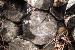 Trä såg snittet fotografering för bildbyråer