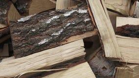 Trä som göras från björk att klippa version stock video