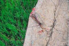 Trä som textureras i trädgården Royaltyfri Fotografi