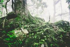Trä som textureras med grön mossa Arkivfoto