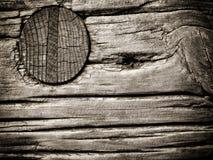 Trä spika Arkivbild