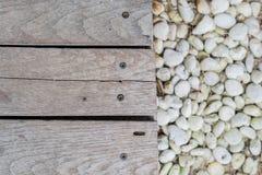 Trä stiger ombord på stenen royaltyfri fotografi