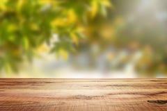 Trä töm och gör suddig skogbakgrund Arkivfoto