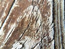 Trä tar av planet fotografering för bildbyråer