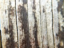 Trä tar av planet arkivbilder