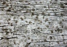 Trä texturera Royaltyfria Bilder