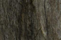 Trä texturera Arkivbild