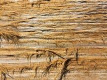 Trä texturera gammalt trä för dörr Royaltyfri Bild