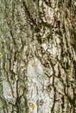 Trä texturerad bakgrund med grön mossa Royaltyfri Fotografi