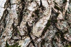 Trä texturerad bakgrund med grön mossa Arkivbilder