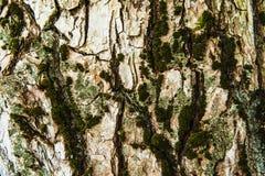 Trä texturerad bakgrund med grön mossa Arkivbild