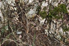 Trä texturerad bakgrund med grön mossa Royaltyfri Bild