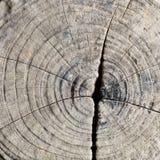 Trä texturerar Royaltyfri Fotografi