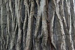 Trä texturerar Arkivbild