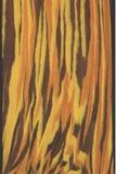 Trä texturerar bakgrunder Royaltyfria Bilder