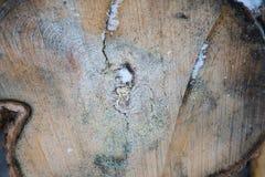 Trä texturerar gammala paneler för bakgrund Royaltyfria Foton