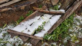Trä under regna snöslask i höst Royaltyfria Bilder