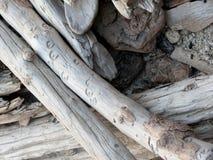 Trä vid sjön Arkivfoton