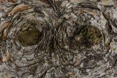Träabstrakt texturbakgrundsträd Arkivbilder