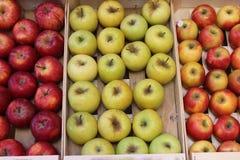Träask med äpplen Royaltyfria Bilder