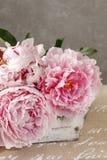 Träask med rosa pioner Fotografering för Bildbyråer