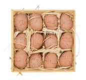 träaskeaster ägg Arkivbilder
