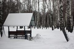 Träaxel i en björkdunge i vinter royaltyfria foton