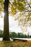Träbänk bredvid det stora trädet nära det lilla lantliga dammet Royaltyfria Bilder
