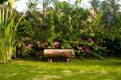 Träbänk i tropisk trädgård Royaltyfri Fotografi