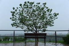 Träbänk och trädet på en regnig dag Arkivfoto