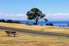 Träbänk på sida av sjön Taupo, Nya Zeeland arkivbilder