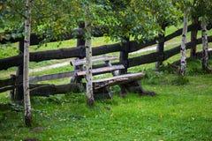 Träbänk under björkträd Arkivbild