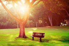 Träbänk under treen i solnedgånglampa Arkivfoto