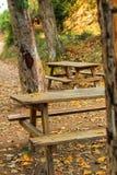 Träbänkar i skogen royaltyfri foto