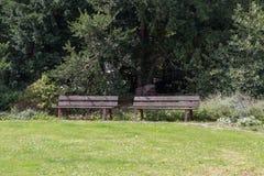 Träbänkar med en häck i bakgrunden och gräsmatta i foen Royaltyfri Foto