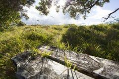 Träbänkplats i utomhus- naturinställning Royaltyfria Bilder